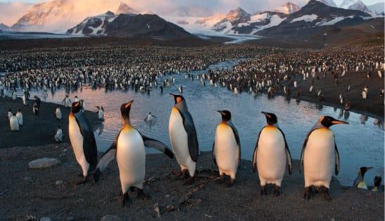 Joe Sartore - Penguins St. Andrews Bay Photo